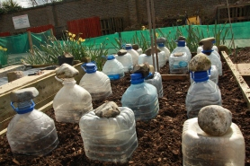 stoned cloches...