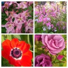 summer hues...
