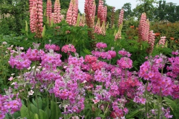 The Herbaceous Border scheme in the Walled Garden at the Phoenix Park...(photo compliments @janpaulkelly)