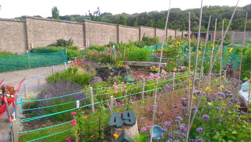 Plot 49 with summer colour