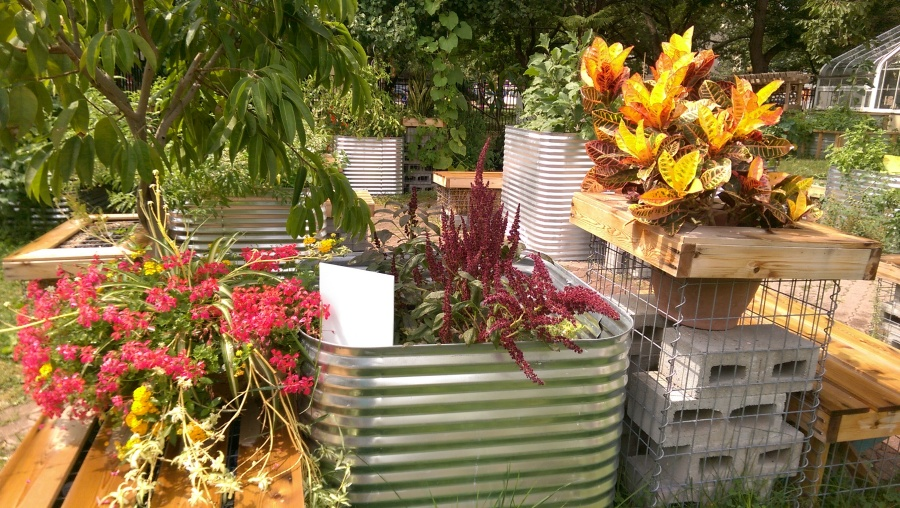 Toronto..container planting in The Allen Garden