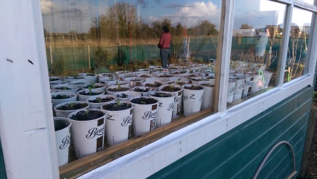 Reflection of a reflection...recycled coffee cups filled with germinating summer potential